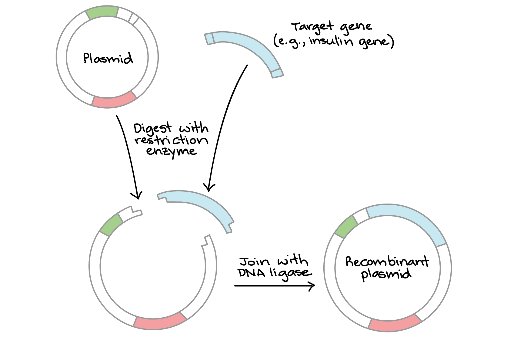 the role of dna in cloning essay