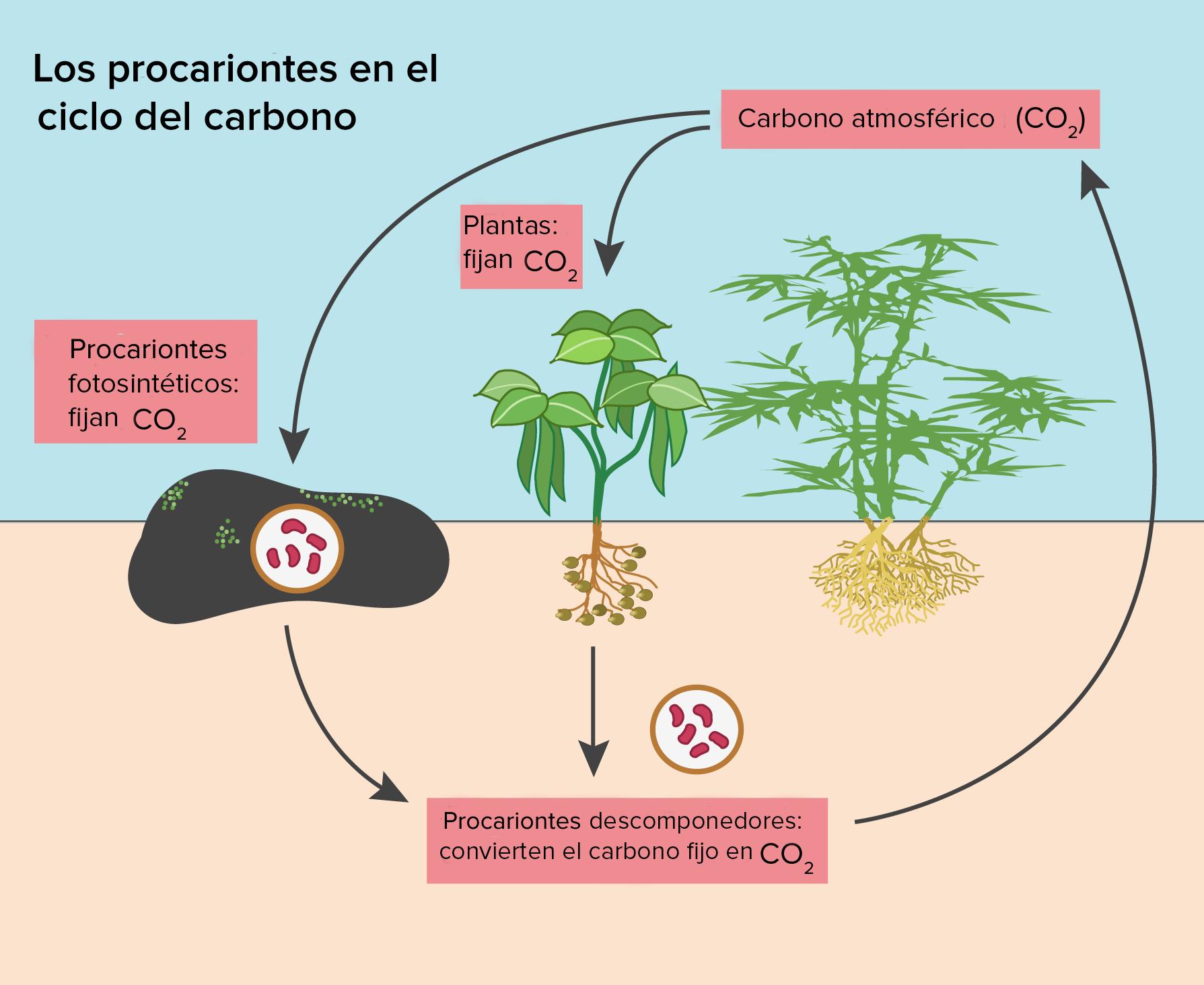 Fotosintesis y sus etapas 88