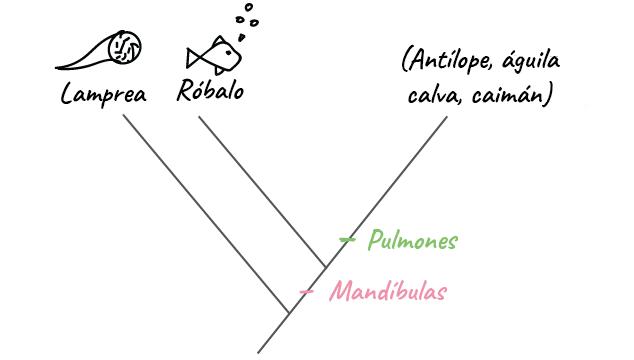 Taxonomía y el árbol de la vida (video)   Khan Academy