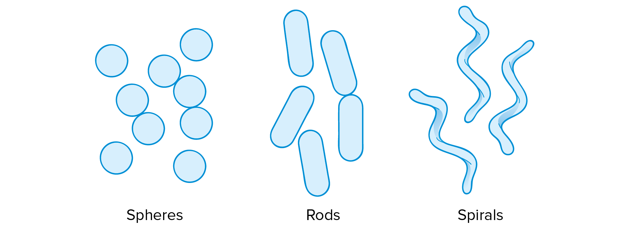 Prokaryote Structure Article Khan Academy Cell This Diagram Shows The Of A Typical Prokaryotic Cells Are Typically Shaped As Either Spheres Called Cocci Rods