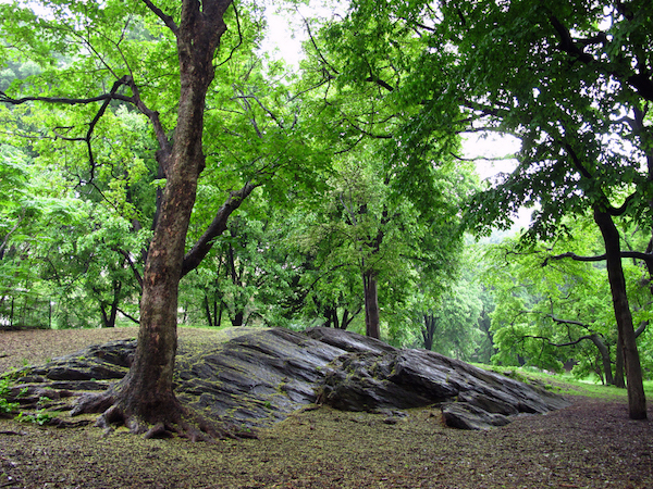 View of a grove with schist outcropping, Central Park, New York City (photo: kpaulus, CC BY 2.0)