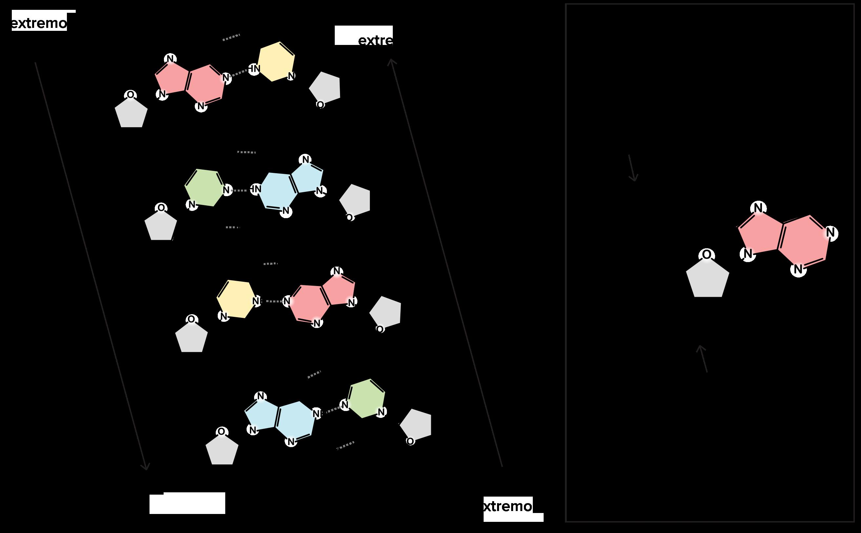 Descubrimiento de la estructura del ADN (artículo) | Khan Academy