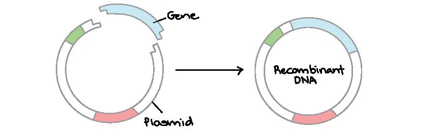 Fragmentation definicion reproduccion asexual artificial