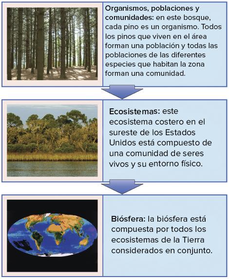 Niveles ecolgicos de los individuos a los ecosistemas artculo