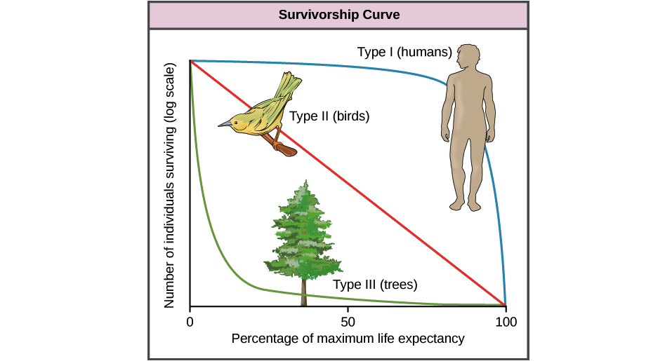Life tables, survivorship, & age-sex structure (article) | Khan Academy