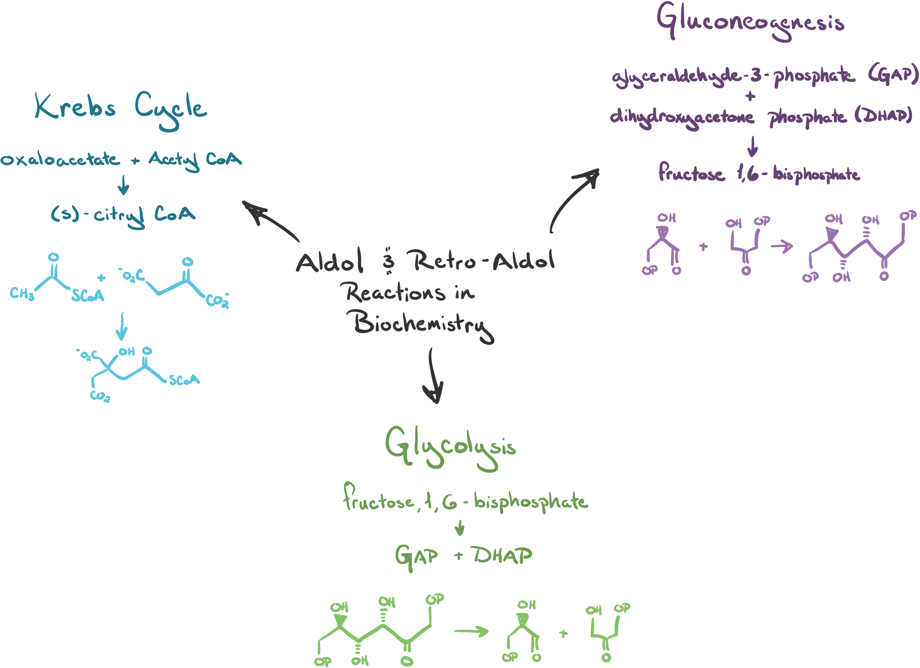 diagram illustrating glycolysis choice image how to