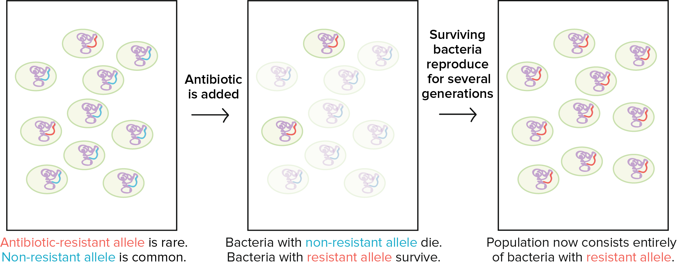Conjugation Transformation Transduction Bacteria Article