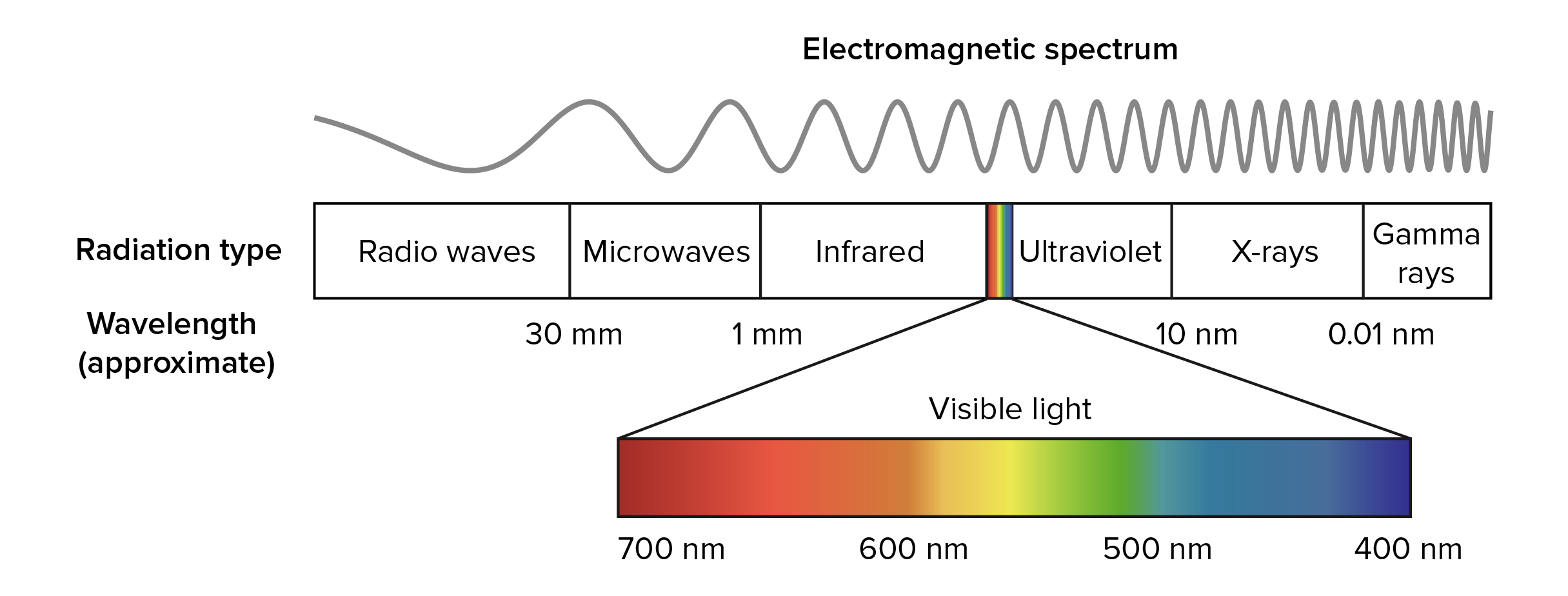 Electromagnetic spectrum used in photosynthesis photosynthesis cellular respiration differences