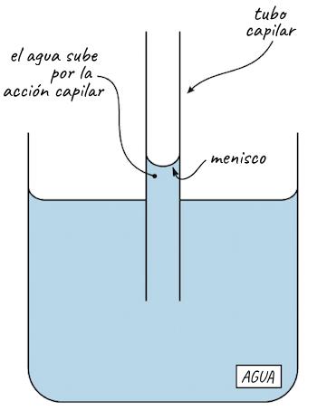 Cohesión y adhesión del agua (artículo) | Khan Academy