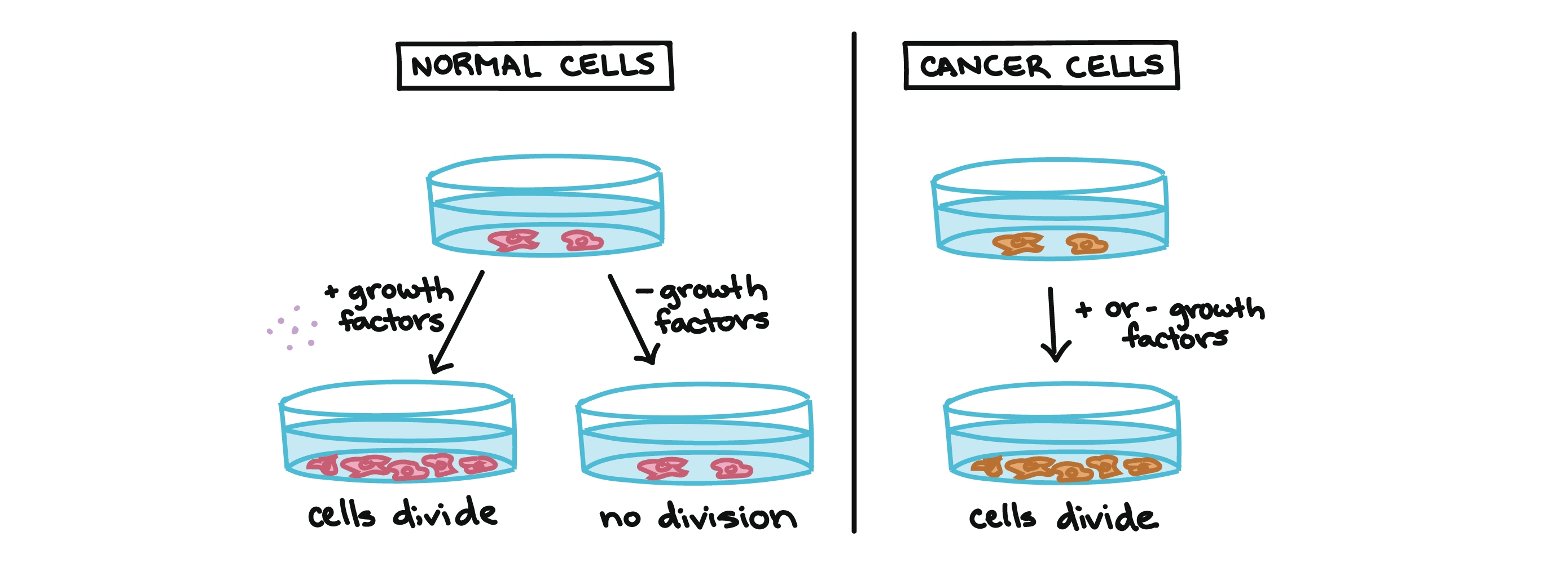 cancer video cell division khan academy