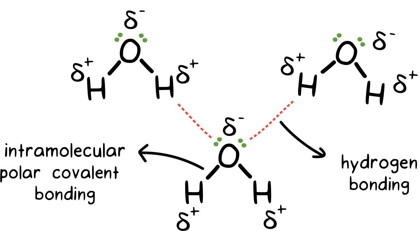 Chapter 8 covalent bonding workbook answer key