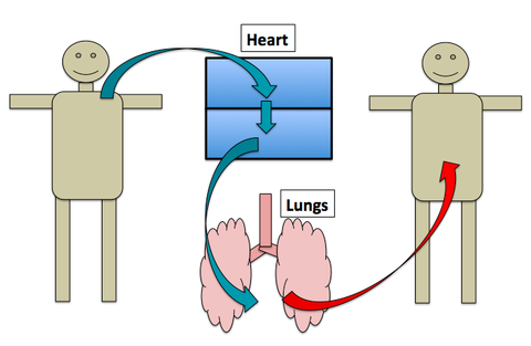 The heart is a double pump article khan academy this diagram shows the heart as having a single atrium and single ventricle blood moves from the body into the atrium and then into the ventricle where it ccuart Choice Image