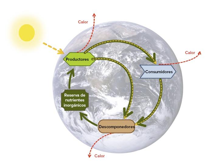 Introducción a los ciclos biogeoquímicos (artículo) | Khan Academy