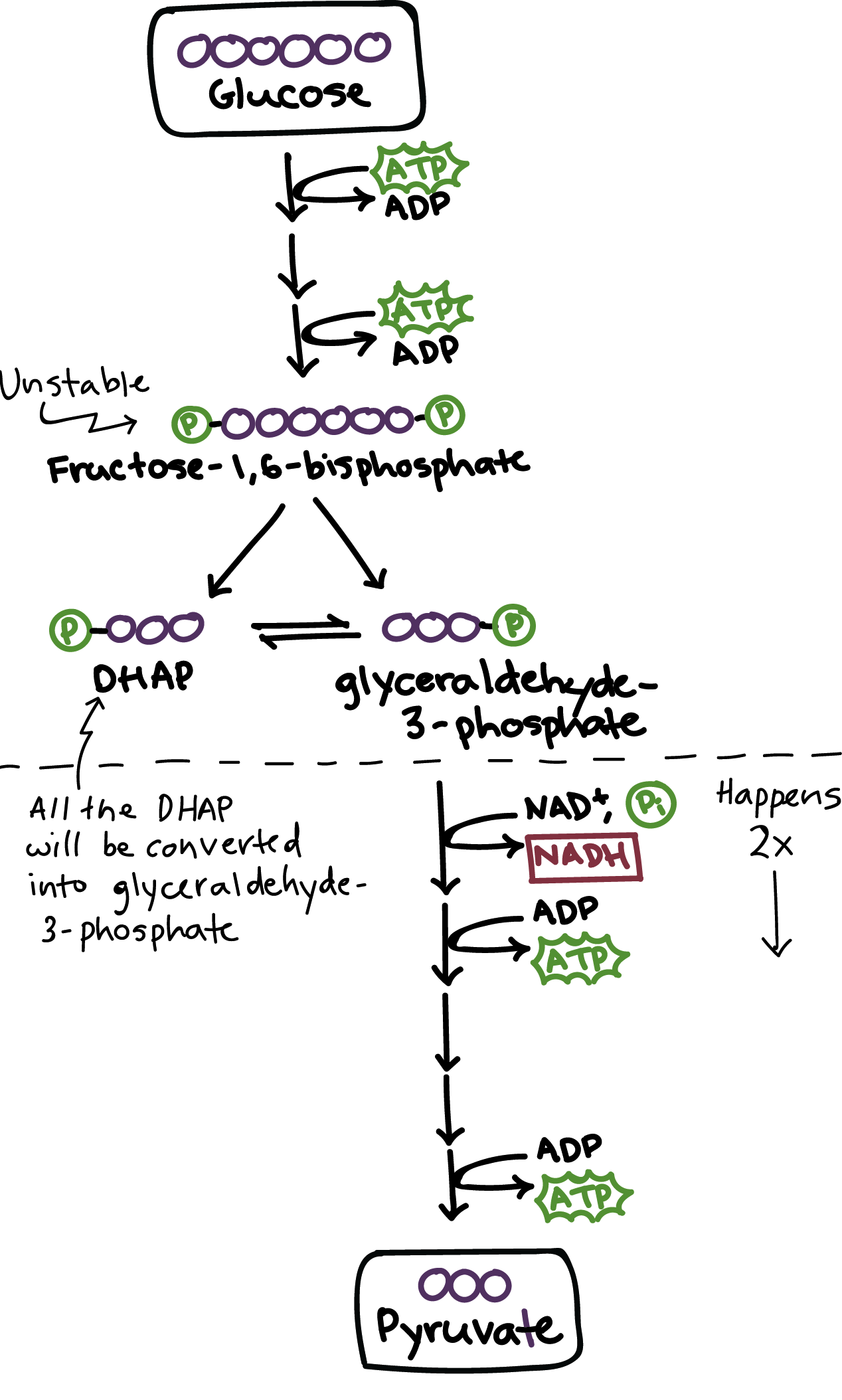 glycolysis   glycolysis   cellular respiration   biology   khan    simplified diagram of glycolysis