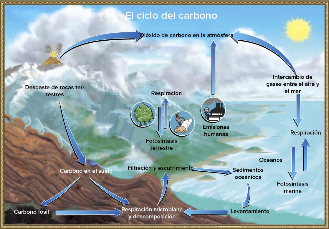 El ciclo del carbono (artículo) | Ecología | Khan Academy