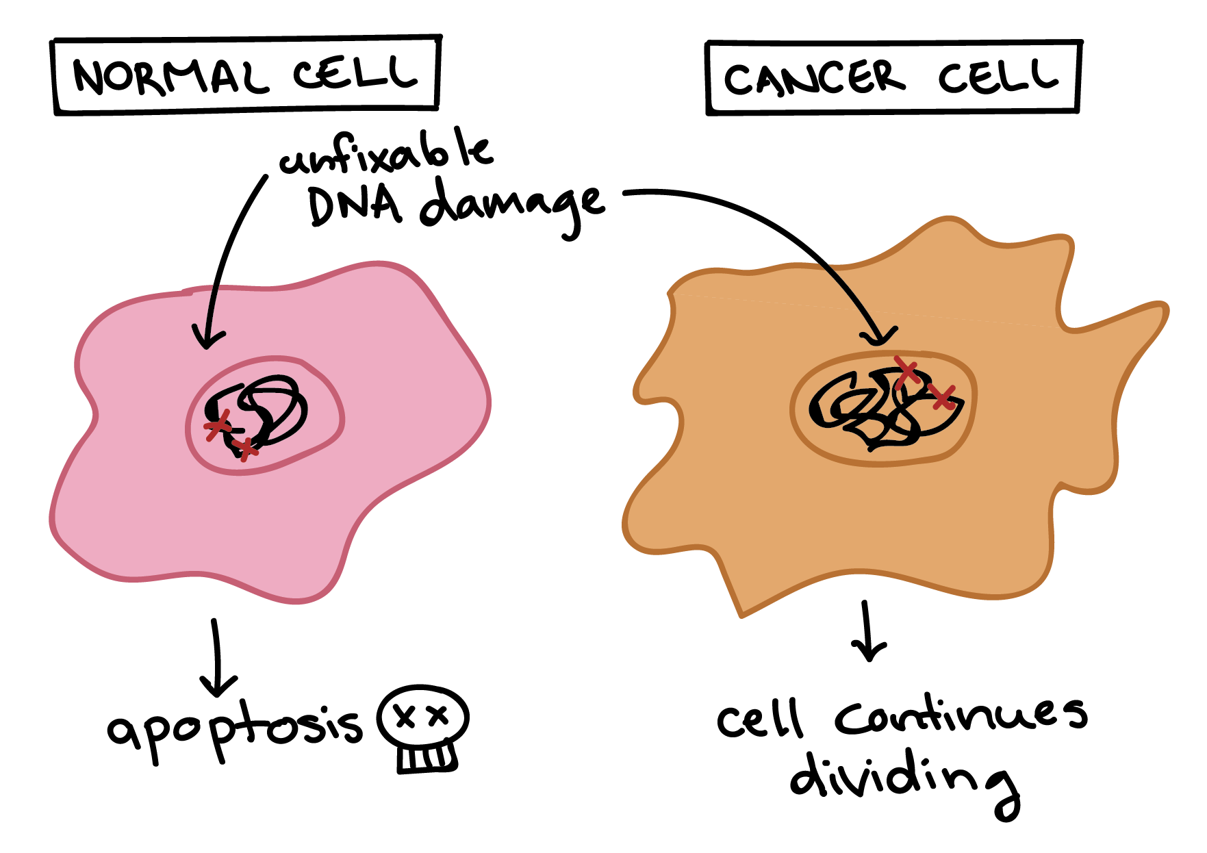 diagram of cancer cell gallery how to guide and refrence
