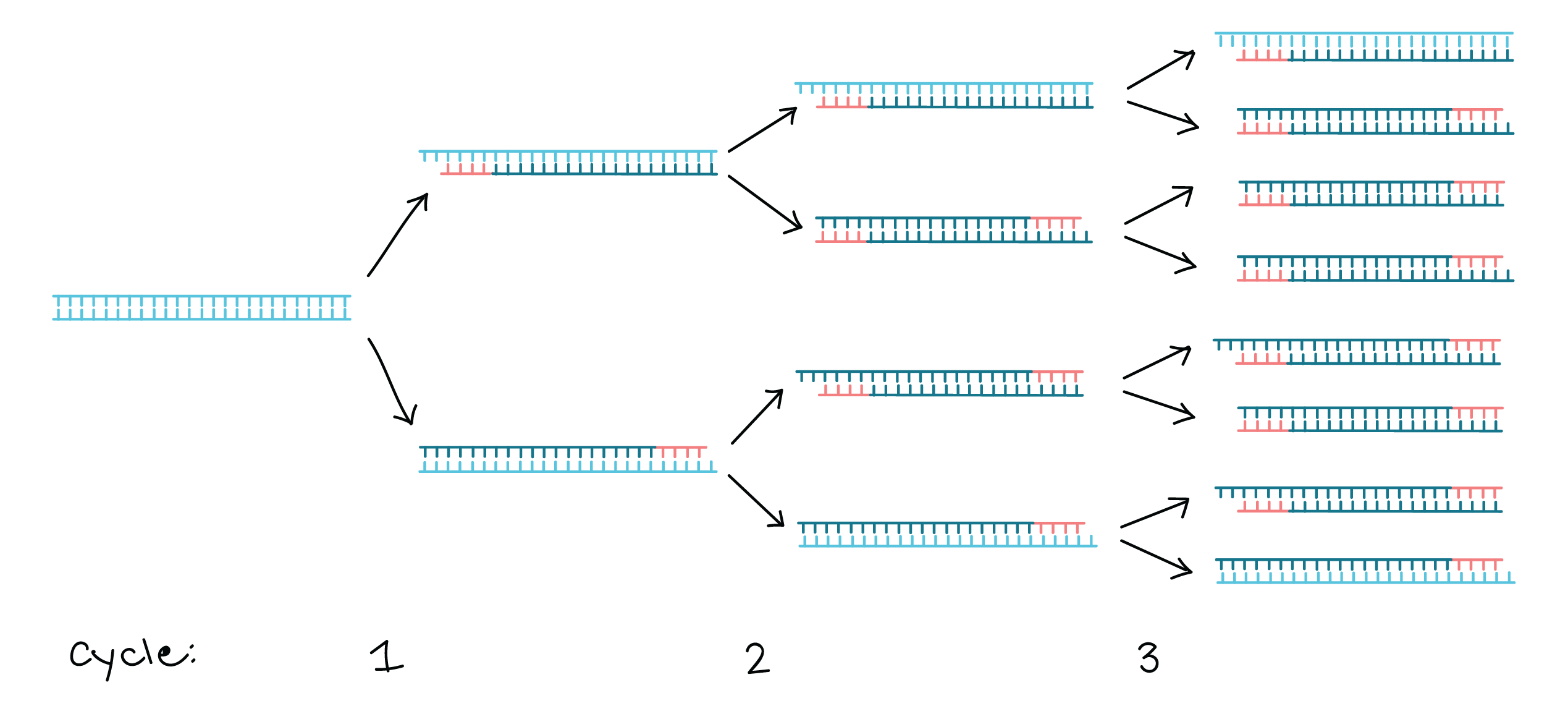 how to choose primers for pcr