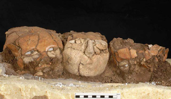 Skulls with plaster and shell from the Pre-Pottery Neolithic B, 6,000-7,000 B.C.E., found at the Yiftah'el archeological site in the Lower Galilee, Israel