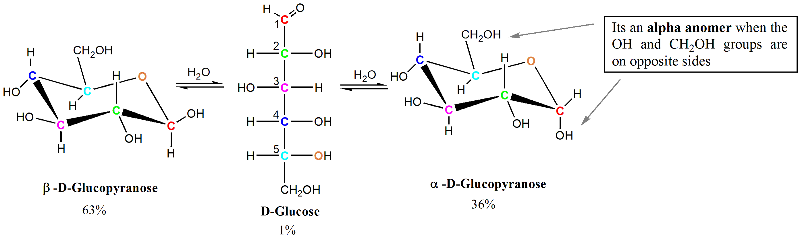 Chair conformation glucose - Diagrams Of Monosaccharides