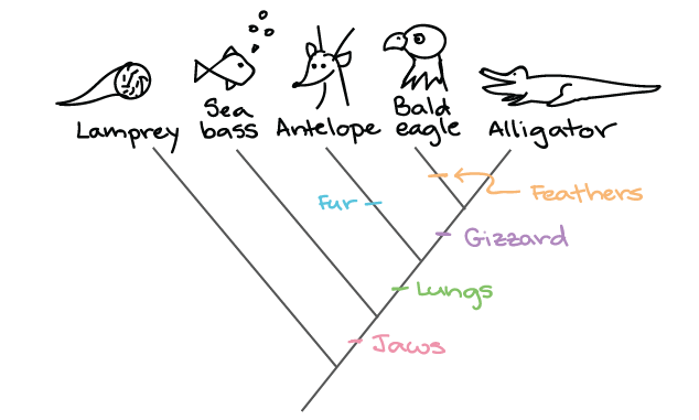 Building A Phylogenetic Tree Article Khan Academy