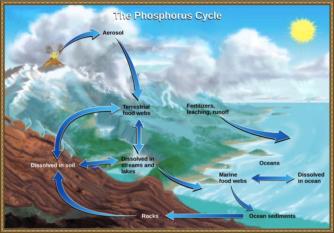 The carbon cycle article ecology khan academy ccuart
