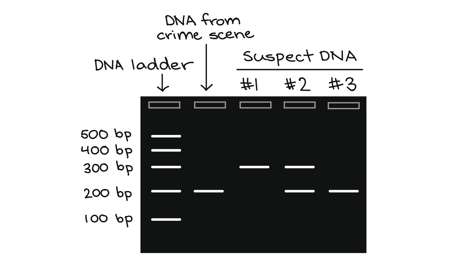 Polymerase Chain Reaction Pcr Article Khan Academy