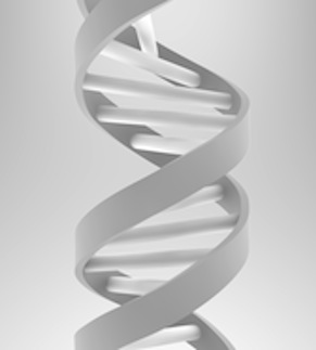 An illustration of the DNA double helix © the Big History Project