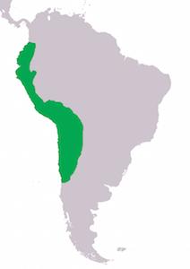 Map, Inka Empire (adapted, CC BY-SA 3.0)