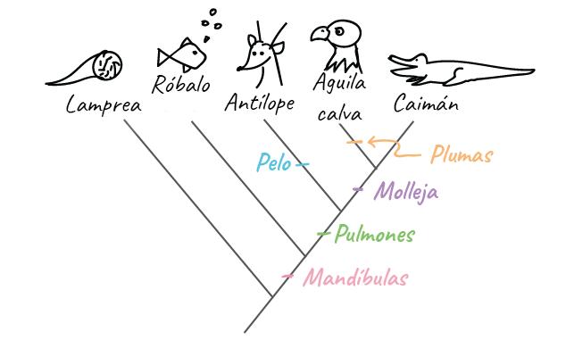 Cómo construir un árbol filogenético (artículo) | Khan Academy