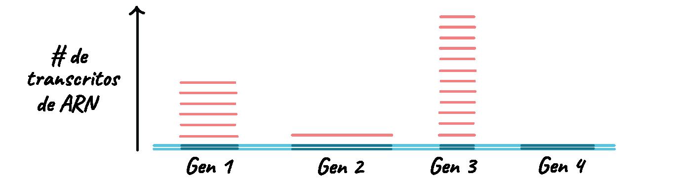 Procesamiento de pre-ARNm eucarionte (artículo)   Khan Academy