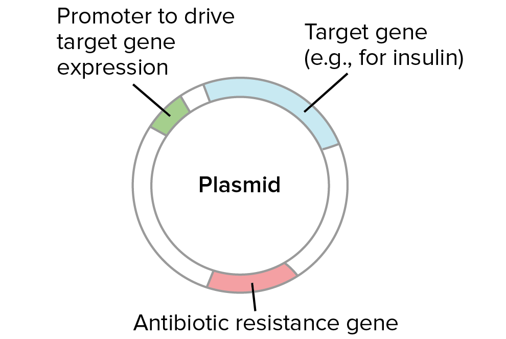 Bacteria and archaea ap biology science khan academy plasmid for bacterial transformation it is a circular dna molecule that contains a target gene such as insulin in the case of recombinant insulin ccuart Image collections