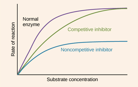 Competitive inhibition (video) | Khan Academy