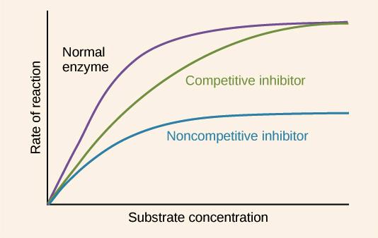 enzyme regulation article khan academy