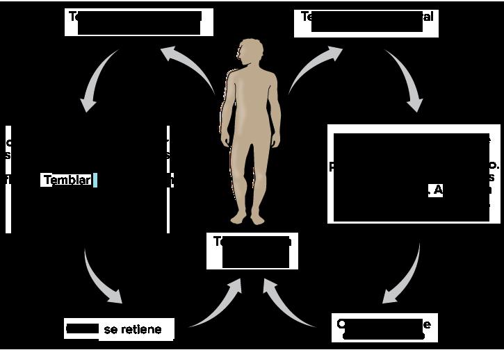 Homeostasis (artículo) | Khan Academy