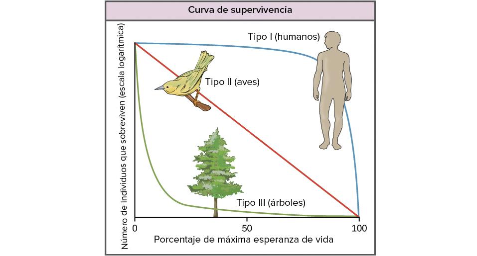 Tablas de vida, supervivencia y estructura por sexo y edad (artículo ...