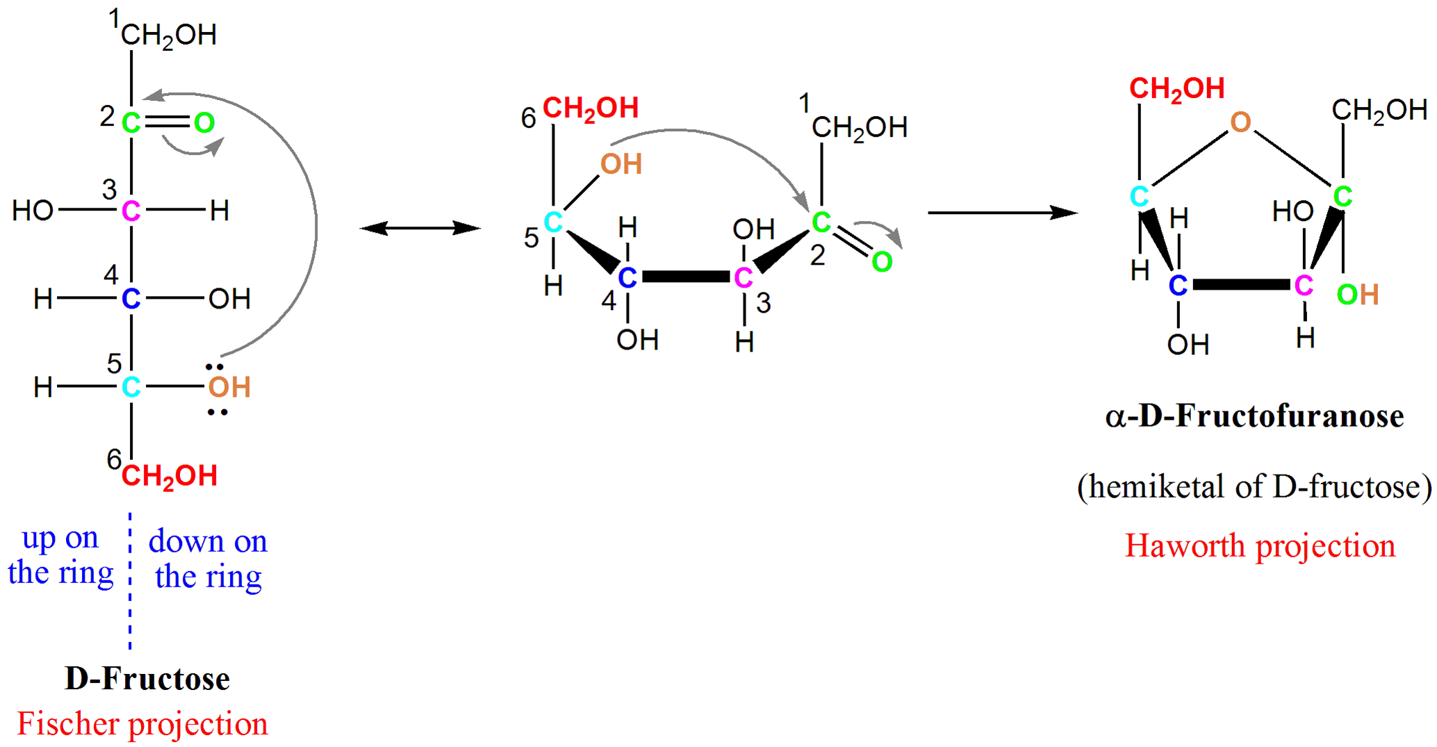 Chair conformation glucose - Diagram Of Fructose Cyclizing