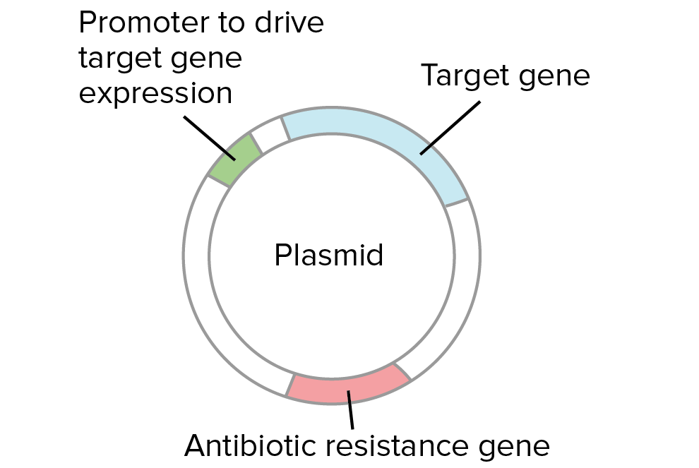 Plasmid  Wikipedia