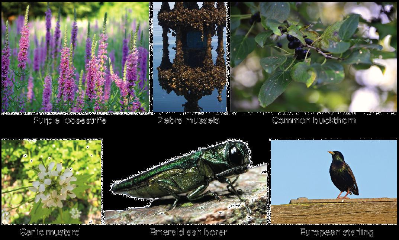 Invasive Species Article Ecology Khan Academy