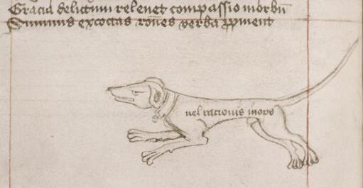 A dog decorating a catchword at the bottom of a medieval page, Oxford, Bodleian Library, Canon. Misc. MS 110, fol. 17v, c. 1400