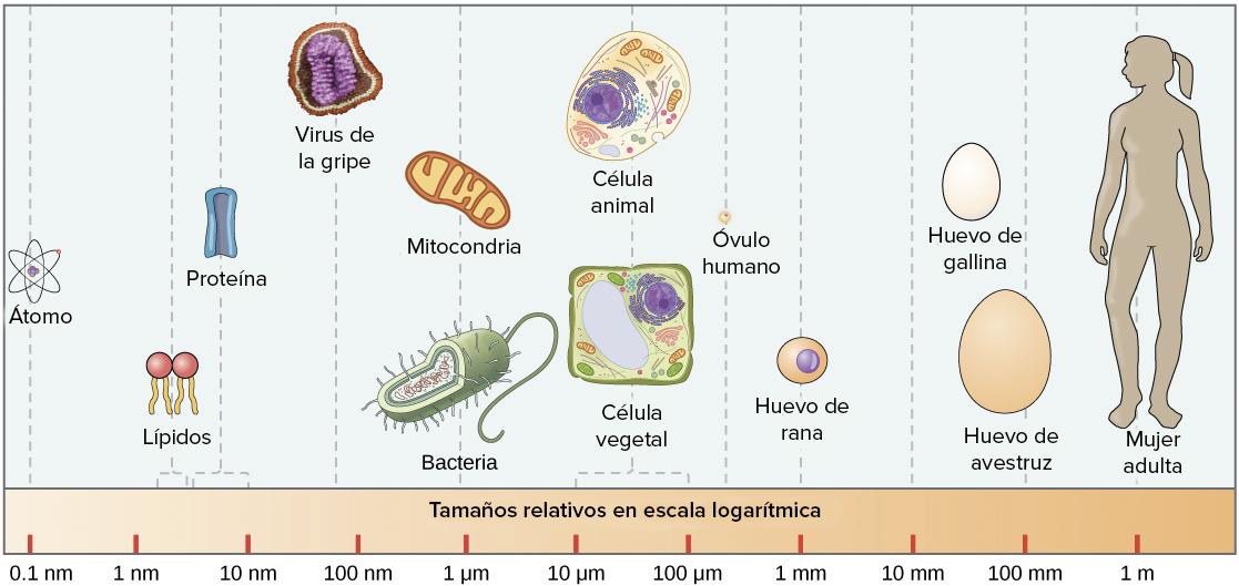 Populares Células procariontes (artículo) | Khan Academy NY24