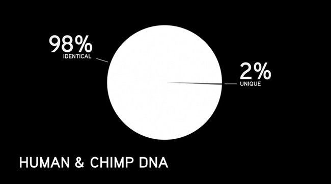 similarities between humans and chimpanzees A comparison between this and the human genome (completed in 2001) show s that 96 % of dna base pair sequences of humans and chimpanzees are the same most of the 4% difference is in duplicated non-gene segments.