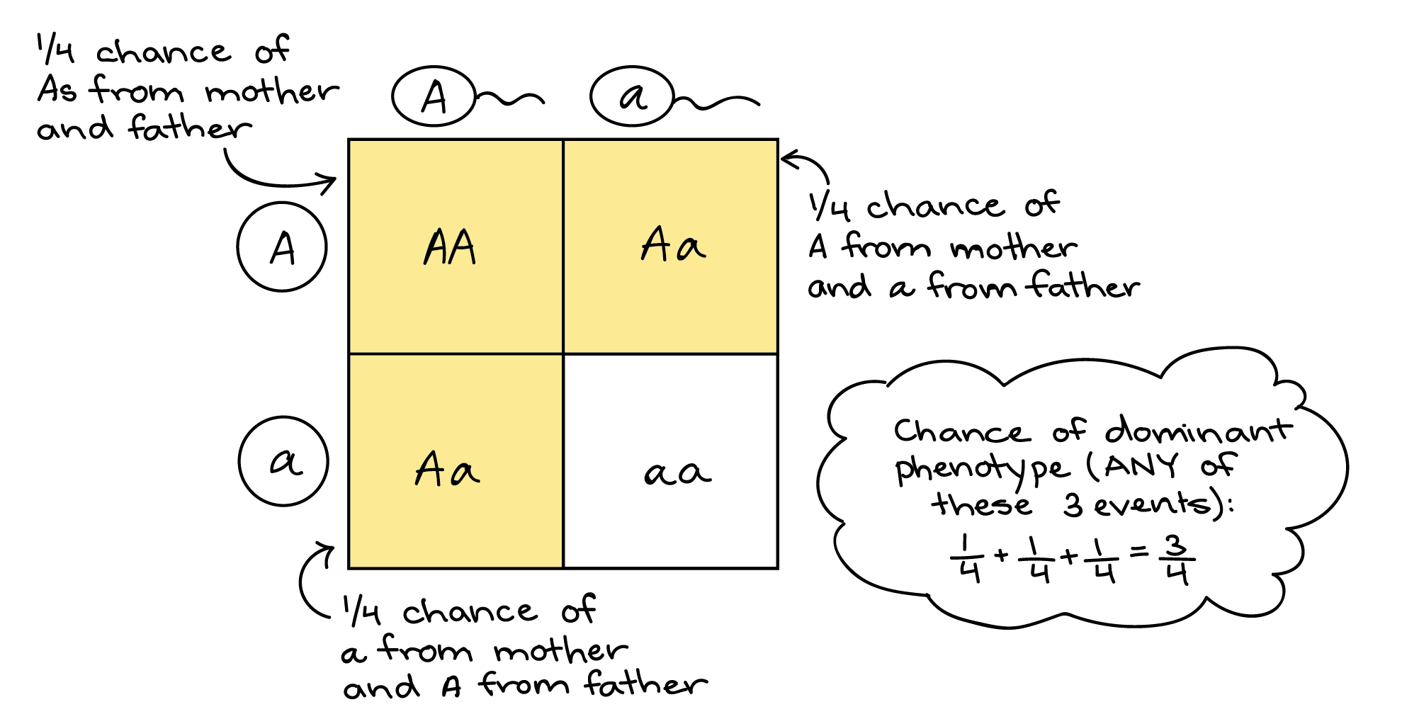 Illustration Of How A Punnett Square Can Represent The Sum Rule