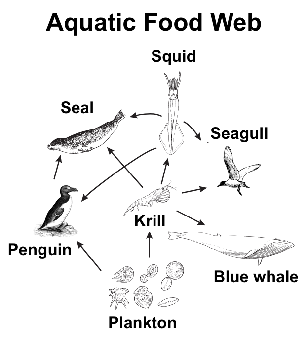 aquatic food web diagram model