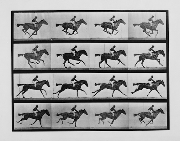 "Eadweard Muybridge, ""Thoroughbred bay mare 'Annie G.' galloping,"" from Human and Animal Locomotion, plate 626, 1887"