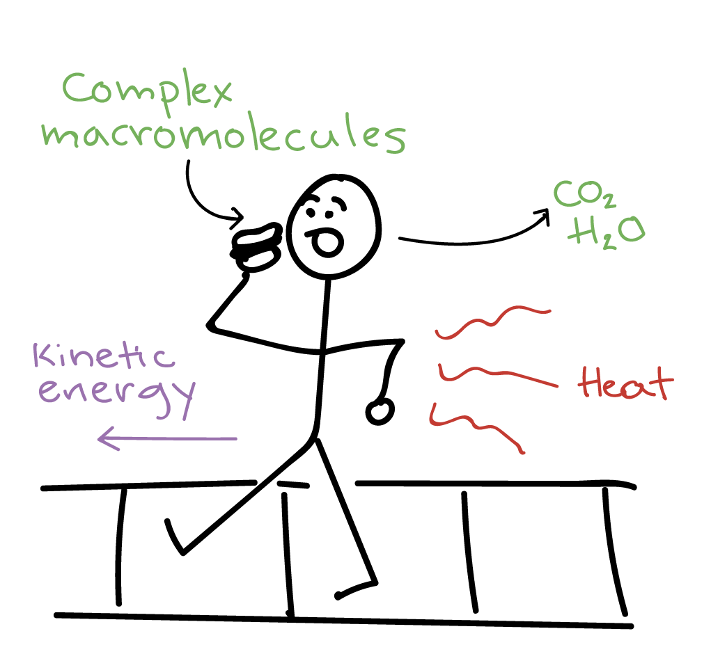The Laws Of Thermodynamics Article Khan Academy Also Can I Run Them In A Parallel Or Some Kind Circuit To Save Cartoon Person Walking With Hamburger His Hand Is Taking