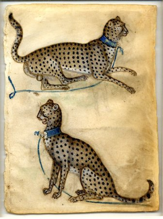 Anonymous Lombard (Workshop of Giovannino de'Grassi), Two studies of a cheetah (detail), 1410. Watercolour and bodycolour on vellum, 16.4 x 12.3 cm. © Trustees of the British Museum