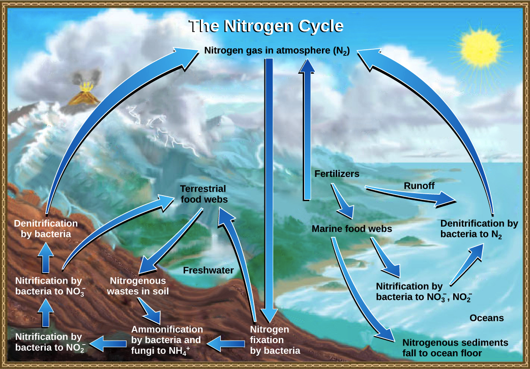 The carbon cycle video ecology khan academy ccuart Image collections
