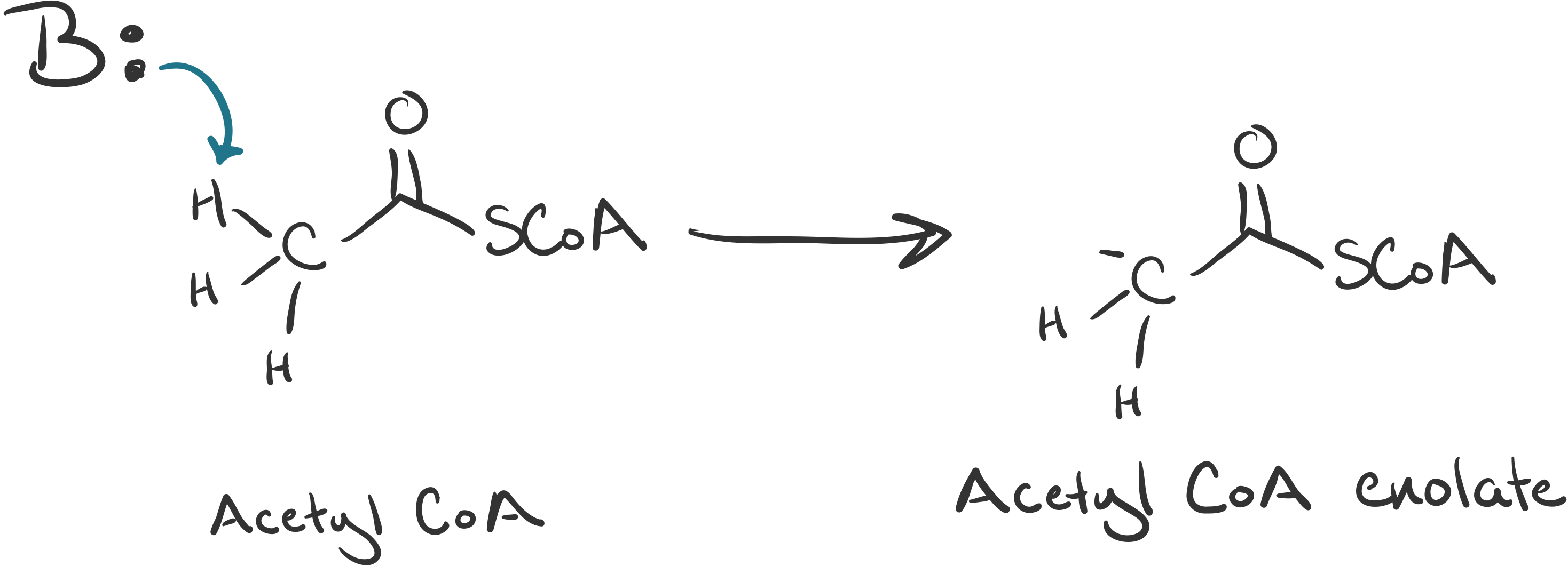Aldol reactions in metabolism