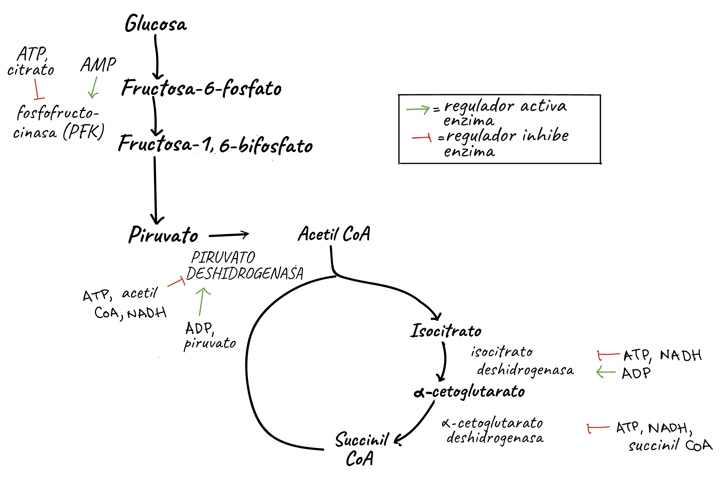 Diagrama De Flujo Respiracion Celular Gallery - How To