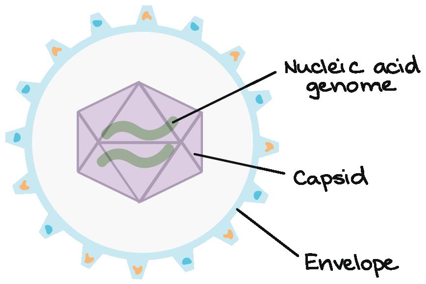 Viruses Biology Science Khan Academy
